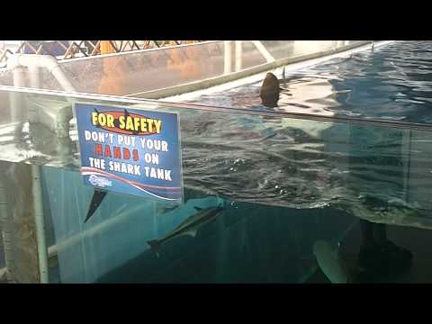 Don't Put Hands On Shark Tank!! Sharks! Manila Ocean Park