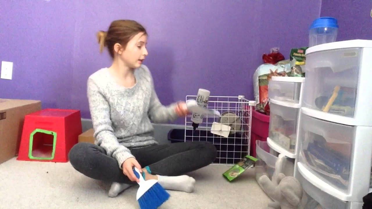 How to litter train your rabbit | Rabbit Care | Holland Lop ...