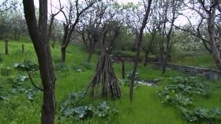 Купить участок земли в Крыму