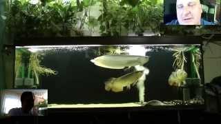 Интервью с победителем конкурса Интерактивный аквариумный туризм (сезон 1)(Андрей, г.Электросталь- аквариум №4 победитель конкурса интерактивный аквариумный туризм! Поздравляем..., 2015-06-16T19:42:17.000Z)