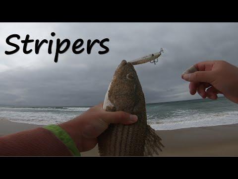 California Stripers | Alt-Kastmaster Lure And Daiwa SP Minnow