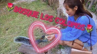 ?멕시코 과달라하라 교환학생 브이로그: 일일 포카혼타스…