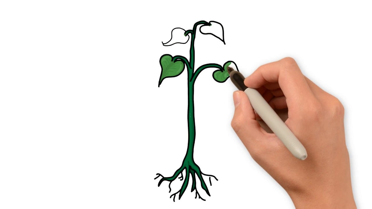 How to draw a plant 18