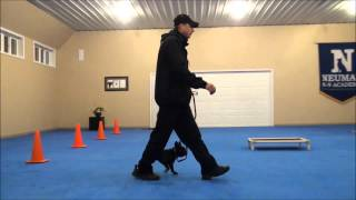 Oscar (french Bulldog) Dog Training Boot Camp Video