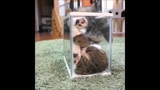 Funny cats #18