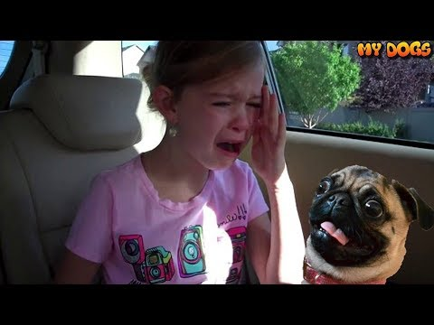 Best New Puppy Surprise For Kids Compilation | You Try Not to Cry