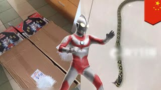 Ular mati ditemukan di dalam kotak mainan Ultraman dari toko online - TomoNews