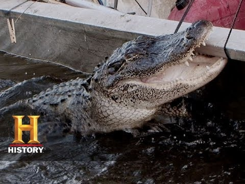 Swamp People: Gator of the Year (S6, E12)