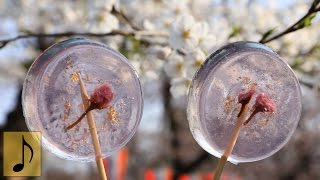 How to make Sakura Jelly Pop Candy【1 Minute Cooking】