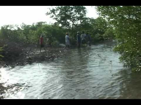 Pagbilao Mangrove Forest (Quezon povince, Philippines) - Documentary/ Educational