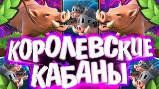 ИСТОРИЯ КОРОЛЕВСКИХ КАБАНОВ CLASH ROYALE ! / истории карт Clash Royale /  Wild Game