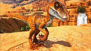 Bebê Velociraptor Em Busca De Um Lar Para Morar e Ser Feliz, Destino Cruel! Ark Dino Evolved (PT/BR)