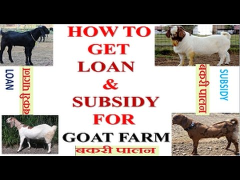 Goat farm || Profitable Agri Business ||  How to get loan for Goat farm