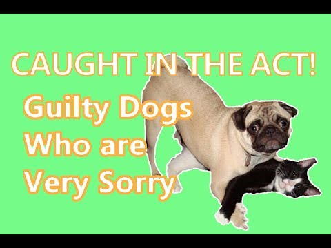 Guilty Dogs who are Very Sorry 2017