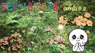 หาเห็ดกันต่อป่าสองค่ะ 🌳ป่านี้อยากบอกว่ามันสุดยอดมาก เยอะสุดๆ18/9/18