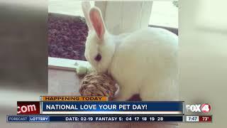 Fox 4 Morning News Celebrates National Pet Day