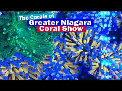 The Greater Niagara Coral Show 2019 - Coral Frags Of The Show!