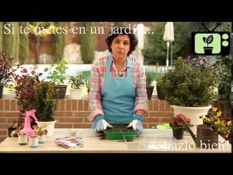Consejos de jardineria consejo 3 jardiner a en casa - Jardineria en casa ...