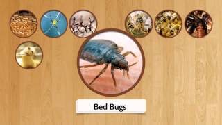 Pest Control Inner West | Call 0417 251 911