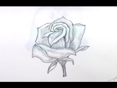 How To Draw Rose Step By Step For Beginners YouTube