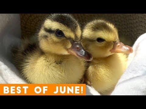 Ultimate Animal Reactions & Bloopers of June 2018 | Funny Pet Videos