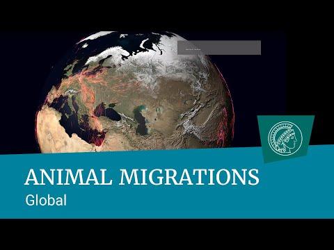 Global animal migrations