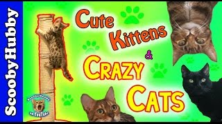 Cute Kittens & Crazy Cats