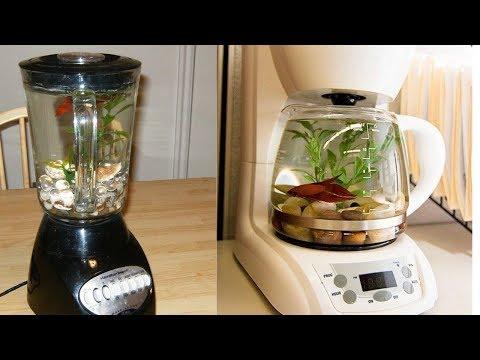 Best And Worst Betta Fish Tank Set Ups Episode 3 | Tuesday Tank Reviews