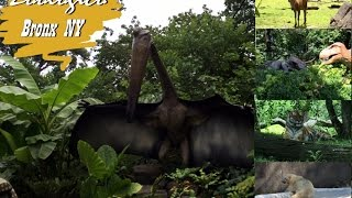 Zoológico Bronx NY #LuckStars