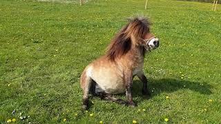 Alysha foaling 2019