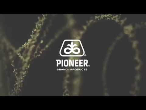 Research into Pioneer® brand inoculant