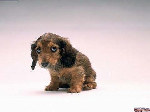 КАК НАЗВАТЬ ЩЕНКА?Клички, имена для собак,КАК ВЫБРАТЬ ИМЯ СОБАКЕ И ЩЕНКУ?