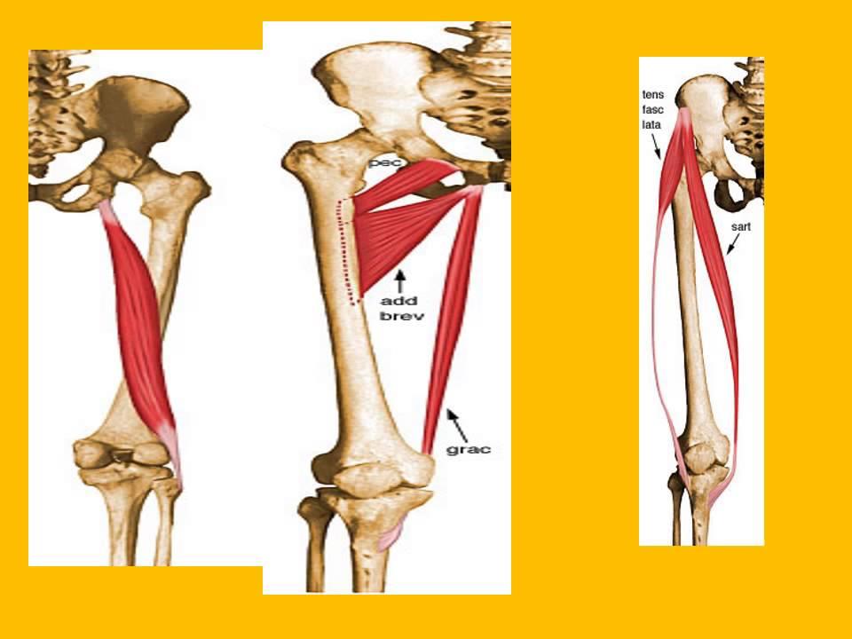 Mri Knee Anatomy Normal Anatomy Dr Ahmed Esawy Youtube
