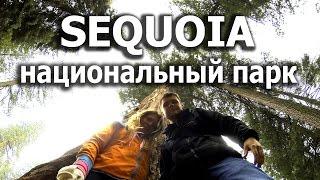 #29. Национальный парк Sequoia в США. Путешествие по Америке(Спонсор видео www.fazenda-promo.ru - организация мероприятий, аренда оборудования, профессиональный звук, свет, лазе..., 2016-05-19T18:29:20.000Z)