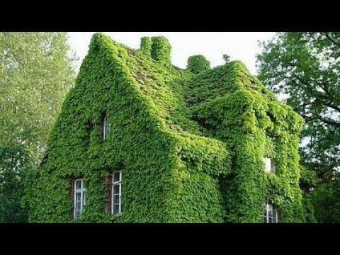 Самые зелёные дома!