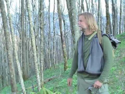 Wild Wanderings Episode 1: Wild Leek Foraging Adventure