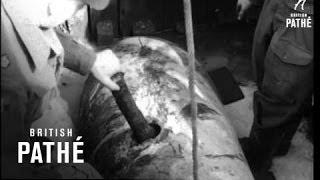 Unexploded Bomb (1949)