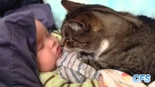 Кошки и дети. Посмотрите, как они любят друг друга.