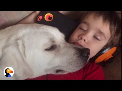 Boy With Autism Gets Dog Who Changes His Life | The Dodo