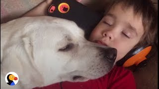 Boy With Autism Gets Dog Who Changes His Life | The Dodo thumbnail