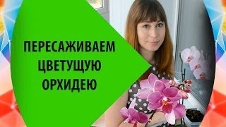 видео Пересадка орхидеи Фаленопсис с гнилыми корнями