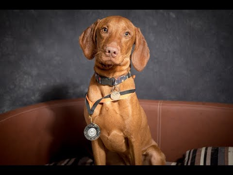 Darcie - Hungarian Vizsla - 3 Weeks Residential Dog Training