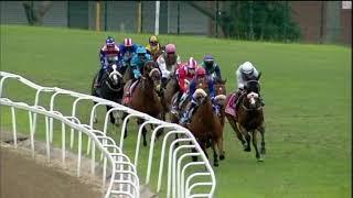 Vidéo de la course PMU PRIX MICHAELMAS