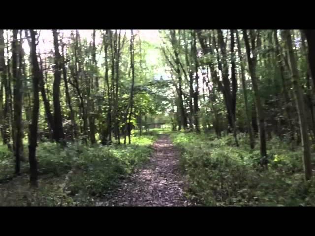 Rixt en Ellis: Het Leeuwarder Bos