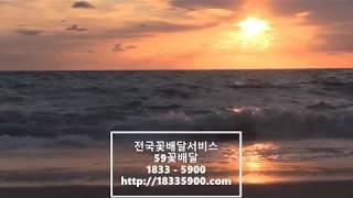 꽃배달서비스 화분배달 결혼화환 근조화환 59꽃배달 ☎(…