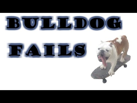 Bulldog Fails | 2016