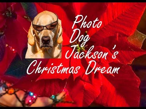 Photo Dog Jackson's Christmas Dream