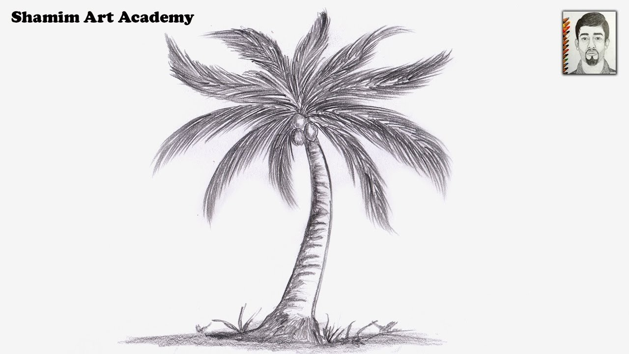 How to draw coconut tree pencil drawing very easy