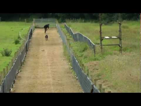 Kilsheelan all-weather gallop