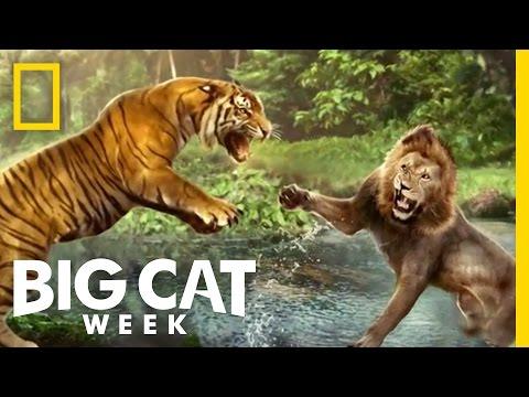 The Future of Big Cats | Future Cat